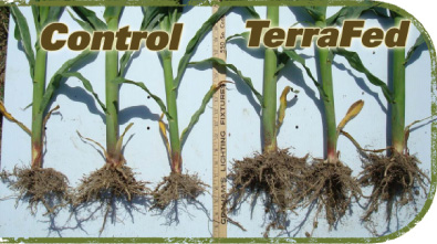 Terrafed stimulates soil for Soil 1 year mba