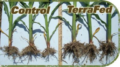 Terrafed stimulates soil for Soil 1 year mba